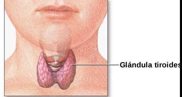 Las 9 glándulas endocrinas